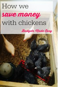 save money with chickens